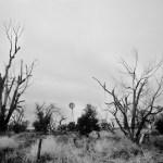 kansas mill tree USA road trip photo ooaworld