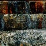 Sea Lions texture, La Jolla