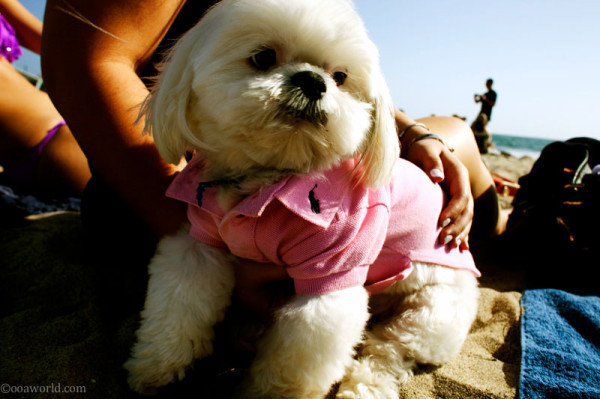 Photos Los Angeles Santa Monica Ralph Lauren puppy USA road trip photo ooaworld