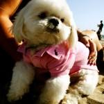 Photos Los Angeles Santa Monica Ralph Lauren puppy USA road trip photo ooaworld