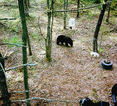 Adventures in Bear Country