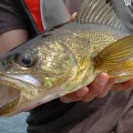 september - Fishing-walleye