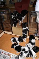 op puppy bezoek bij zus Anke