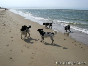 op het strand met Jelmer Lopke en Jitske