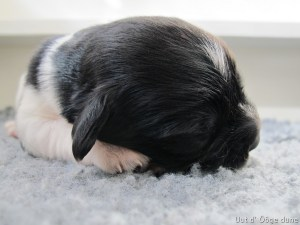 ssst ik slaap!!
