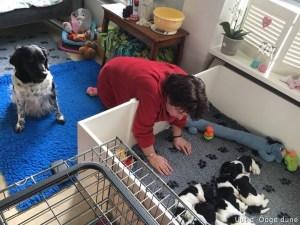 Bertha komt bij de pups kijken. Bine houd het goed in de geten!