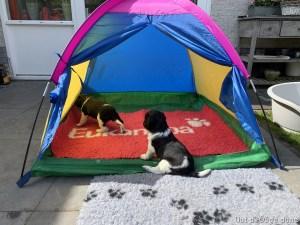 zo we gaan camperen