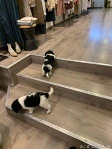 traplopen mogen we nog niet!