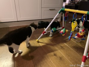 en daar heb je die kat weer kusje