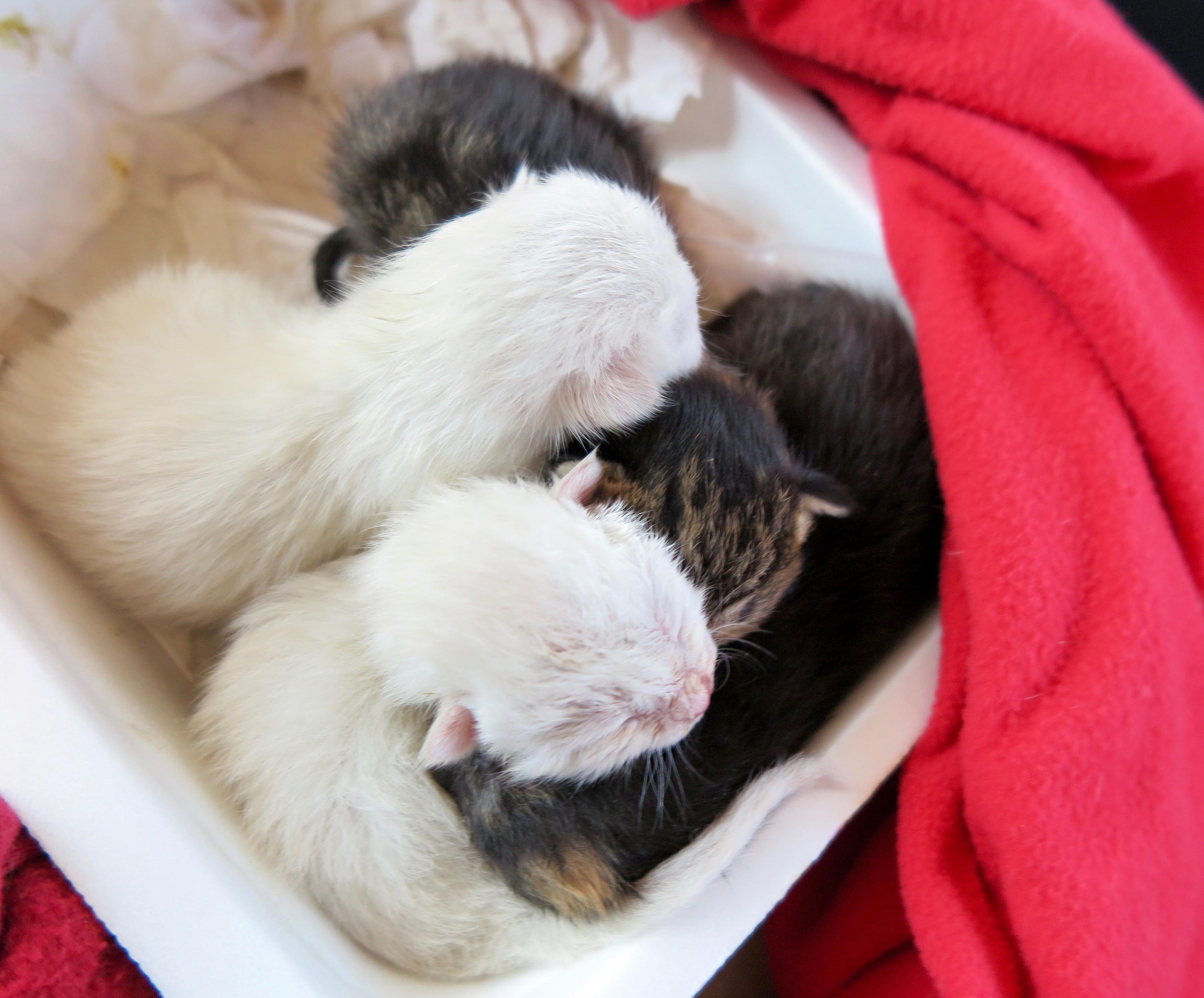 Tails of Four Kittens
