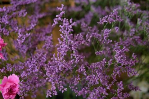 oopsadaisy-florist-beauly-8