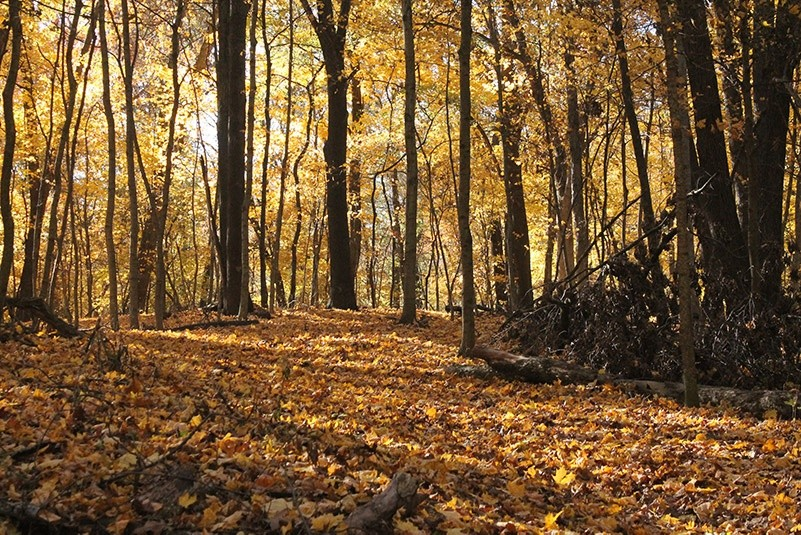 skoven om efteraret