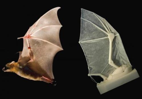 The robotic bat wing Credit: Breuer and Swartz labs/Brown University