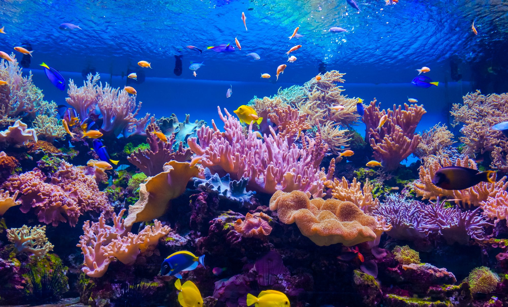 Could Microfragmentation Be The Answer For Coral Reef