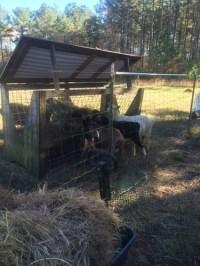 Treestar Farm: The PVC Queen