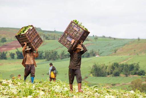 A leggere il rapporto dell'ONU c'è di che vergognarsi. La condizione del lavoro da schiavi nelle campagne già si conosceva, ma ora è l'ONU a certificarla. Il sofisticato sistema alimentare italiano si regge sul caporalato diffuso.