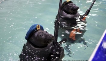 6 Best Navy SEALs Documentaries Of All Time (Updated 2019)