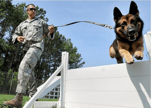 Army Military Working Dog Handler (MOS 31K)