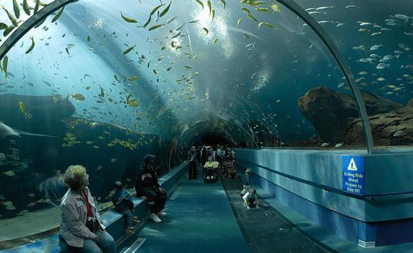 voyageur tunnel georgia aquarium