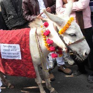 Donkey as UP CM