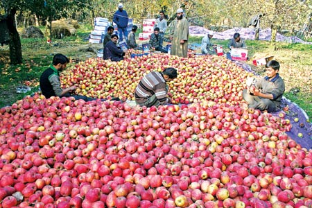 Terrorists threaten apple orchard owner in Shopian, offload consignment in a a bid to wage economic warfare in the valley