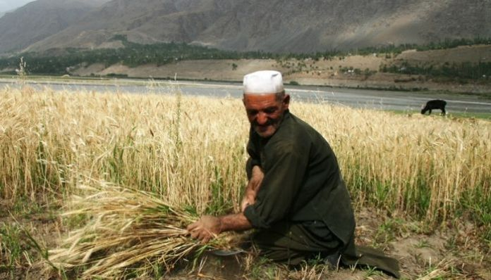 Diplomacy: India exports surplus wheat to Afghanistan and Lebanon