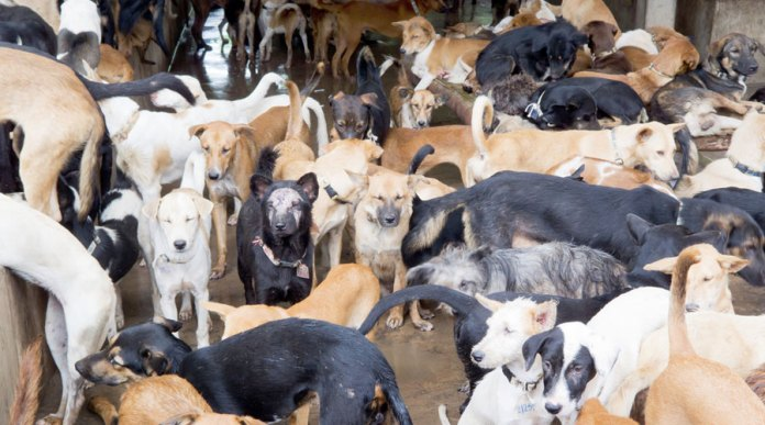 Dog Meat ban in nagaland after animal rights activists oppose eating dog meat
