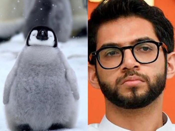 Man booked for calling Aaditya Thackeray Bbay Penguin