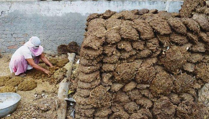 Chattisgarh: 100 kg Cow dung stolen in Koriya by locals