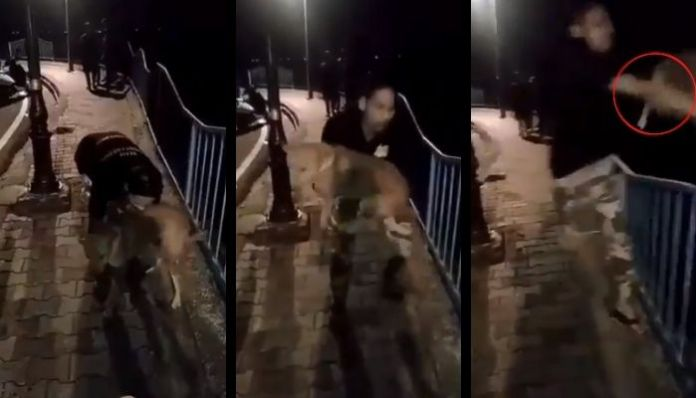 Madhya Pradesh: Police arrest one Salman Khan for throwing stray dog off a bridge