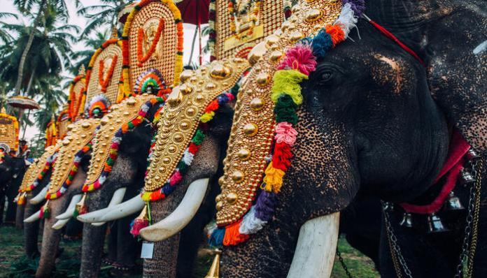 MP Elephant Adoption Scheme