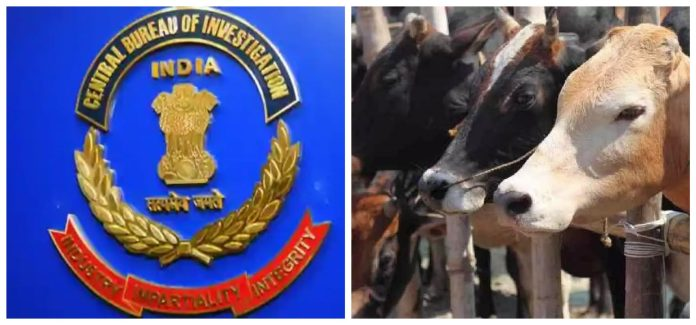 CBI nabs cattle smuggling kingpin in West Bengal