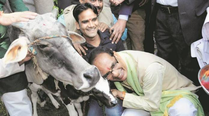 Shivraj Singh Chouhan announces a 'Gau cabinet' for the preservation and welfare of cattle in Madhya Pradesh