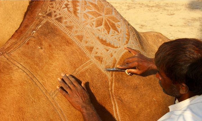 Camel hair art at Bikaner Camel Festival