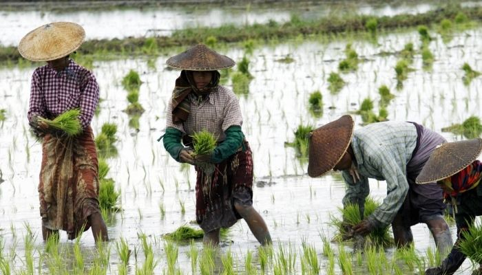Karnataka: Reliance Retail to buy 100 quintals of rice from farmers at prices higher than MSP