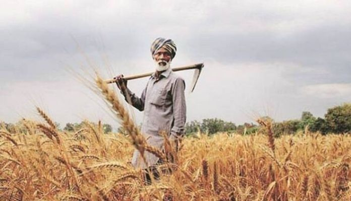 Farmers in Punjab reap the benefit of DBT for the first time: Details
