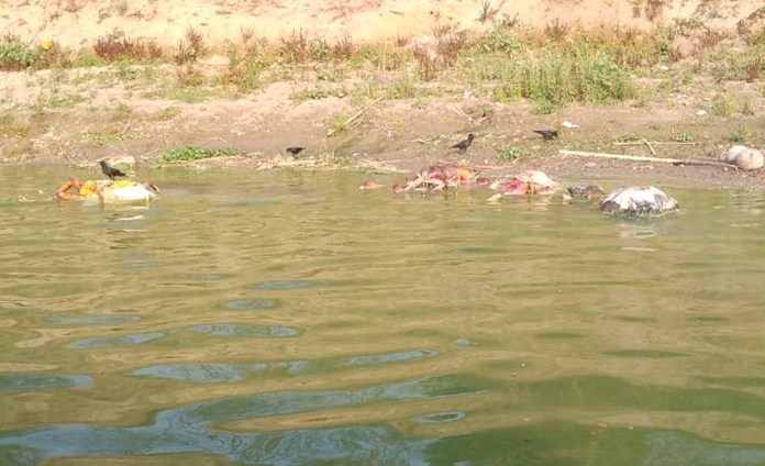 Bodies found floating in Ganga river in Buxar, spark concerns