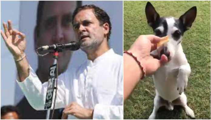 Assam CM Himanta Biswa Sarma remembers 'that famous meeting' with Rahul Gandhi and his dog