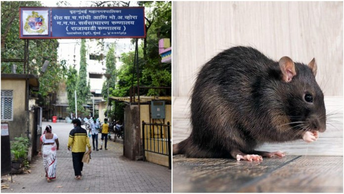 Unconscious patient in ICU bitten by rats in Mumbai hospital