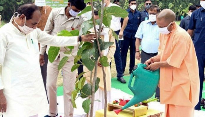 250 million saplings planted in mass plantation drive in UP