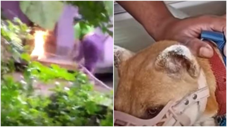Kerala woman sets mother dog and her seven puppies on fire