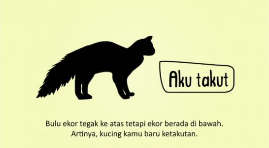 Kenali_Suasana_Hati_Kucing_dari_Gerak_Ekornya