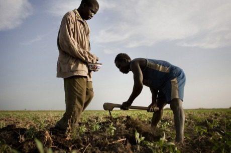 Nigeria_agriculture-460x306