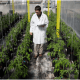 Plant Breeding and Seed Technology