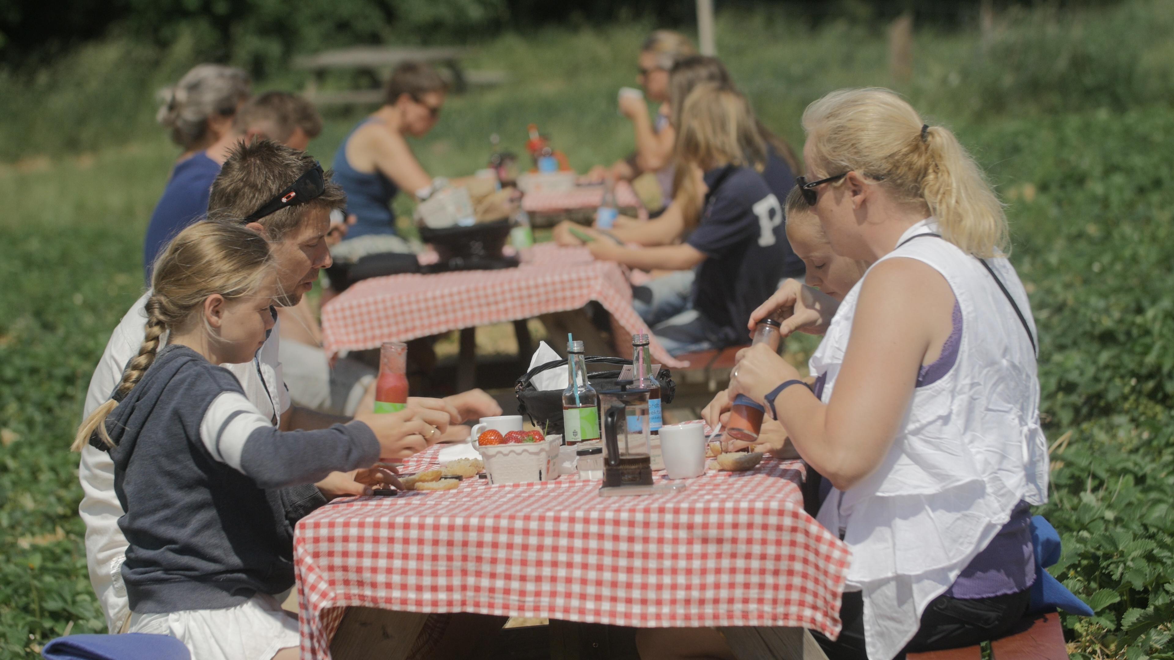 Det vigtige picnickryds