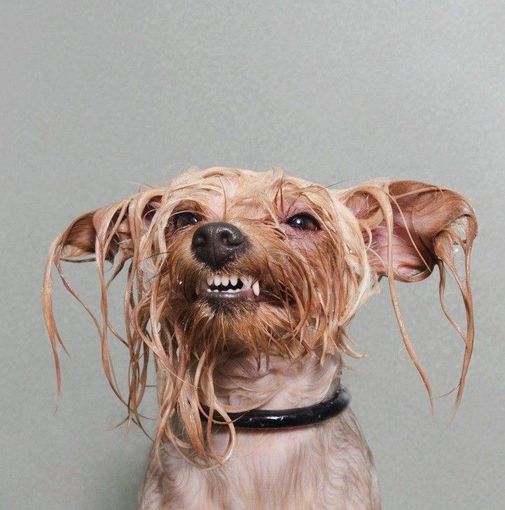 wet dog sophie gamand