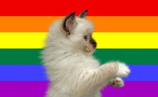Chat homosexuel