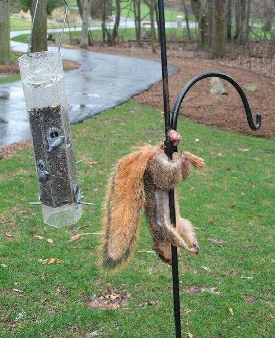 caisse-epargne-ecureuil