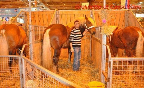 chevaux salon