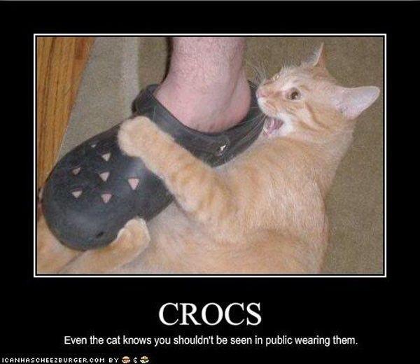 cat-hates-crocs